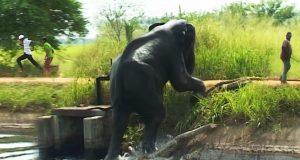 Wild Elephant taking a dip on a hot afternoon - Sri Lankan wild Elephant