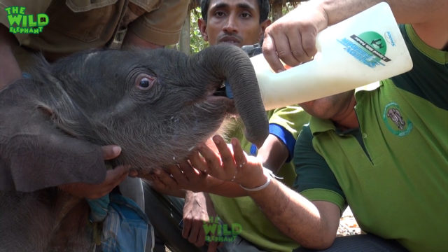Top best compilation video of elephant rescue in 2018