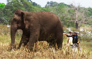 Huge elephant gets medical treatment from wildlife rescue team