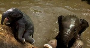 Young elephant falls into a well, rescued by villagers Elephant rescued from drowning in a well