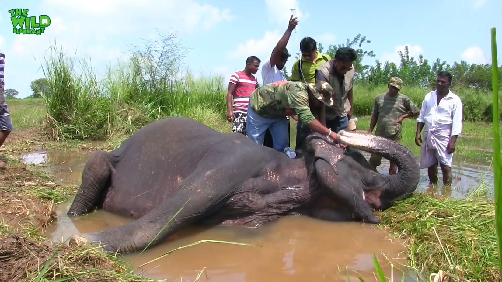 A Sick Elephant Gets Medical Attention: Wildlife deserve the best too