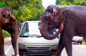 An Elephant Invaded A Human Village: No harm, No Foul, A Story of Averted Danger