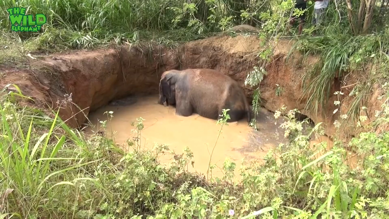 Elephant That Fell Into A Muddy Well A Happy Elephant is worth all the trouble