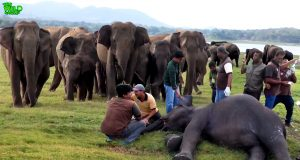 Elephants get rapid medical treatment for their sickness | lifesaving medical care for elephants