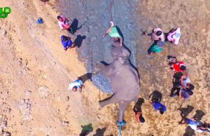 Shot By An Unknown Party Elephant Rescue Mission Fail