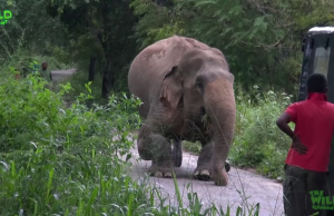 A Rescue Mission by a wildlife team: Humanity at its best, showing what humans can do