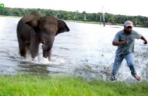 Wounded elephant in the mouth chases vet doctors trying to treat wounds