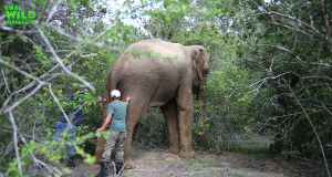 Rescue Mission For A Calm Elephant: Humanity Reaching Out