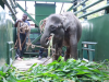 The Elephant That Won't Get In: A Story of A Patient Wildlife Team