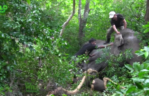 Huge elephant loses life as rescue team tried all they could