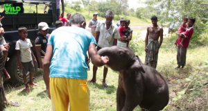 Baby Elephant With Tied Legs: A Successful Rescue to a Better Home