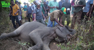 Elephant gets knocked down by a bus, gets treated and made alive