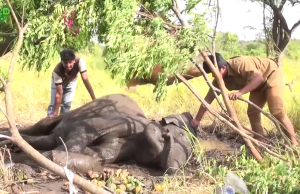 Injured Elephant Humanity doing it's very best to save an Elephant as if it were one of them
