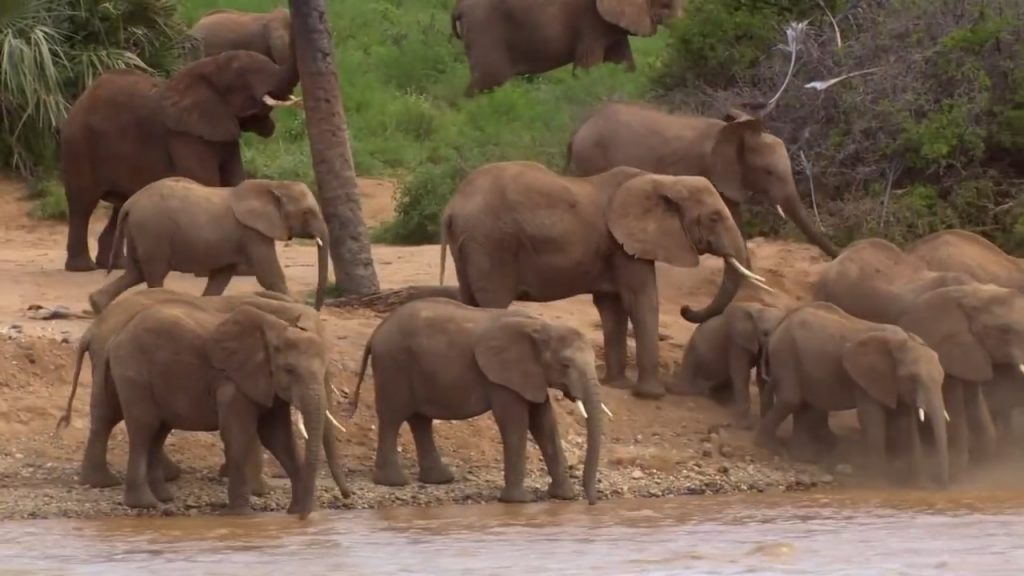 Don't buy ivory to save lives of fascinating giants on the land