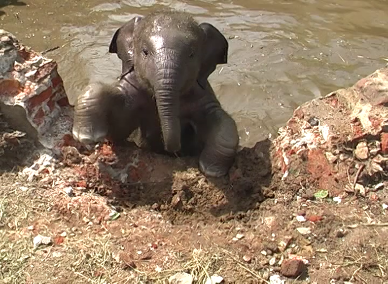 A terrific situation, being chased by a rescued baby elephant (very funny)