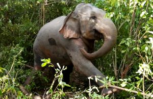 Elephant gets saved from hunters by wildlife team (part 1)