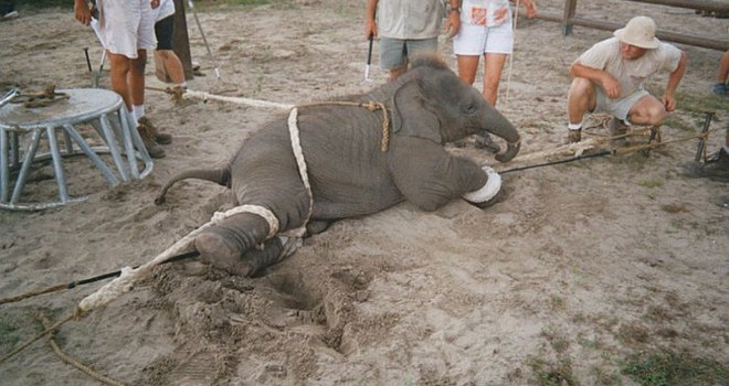 Elephant circus acts are not for entertainment