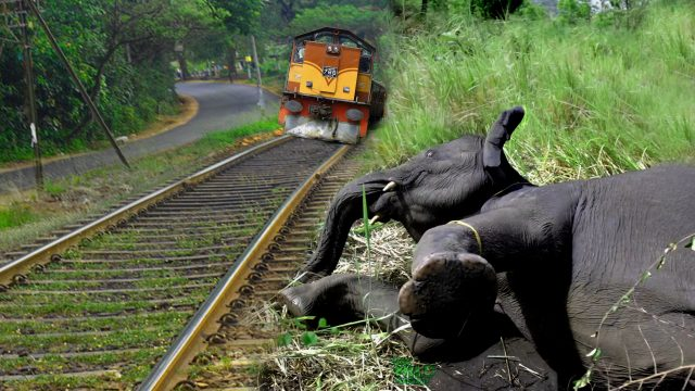 Saving an elephant from a train accident
