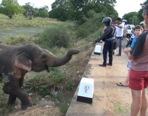 Friendliest elephant from the wild