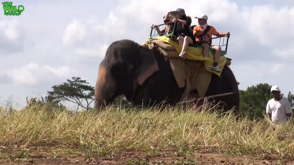 Animal cruelty caught in act: Elephant rides