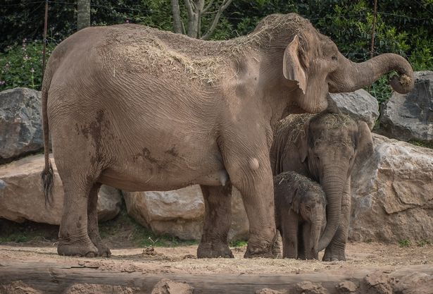 Unexpected baby arrival! Chester zoo celebrates the birth of a newborn baby three months after the due date