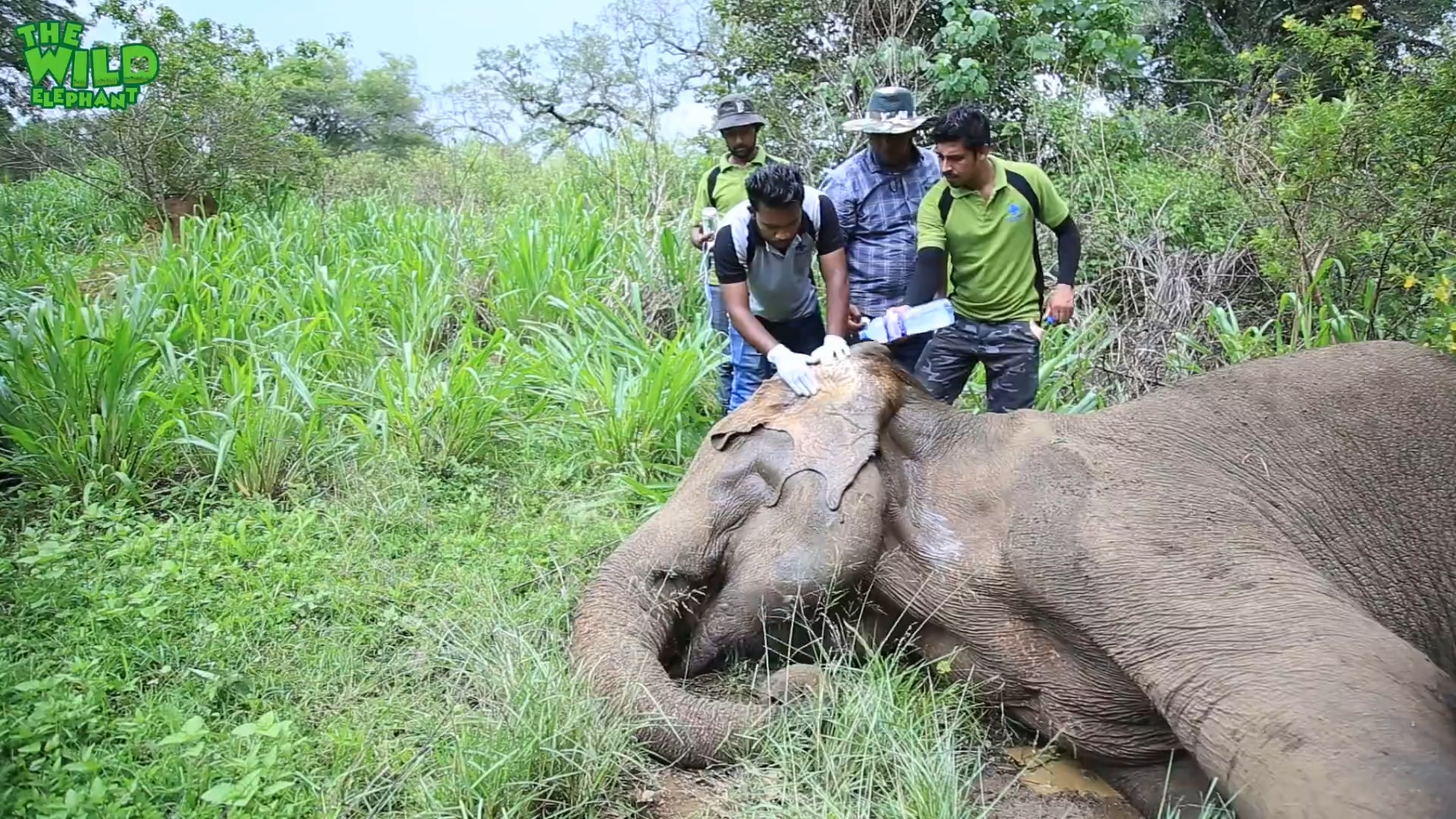 Injured elephant gets multiple injections from vet doctors