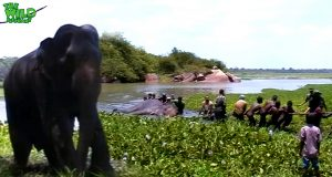 Elephant given a chance to live again. Greatest elephant rescue mission ever