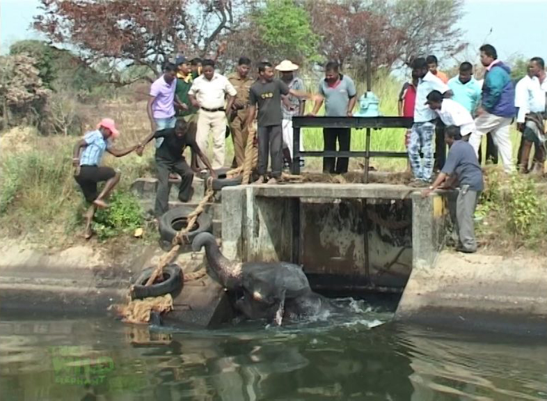Saving another giant elephant from a canal