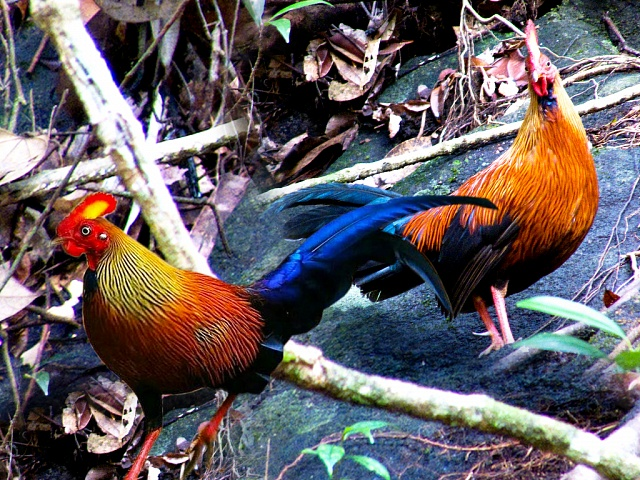 World Heritage site - Sinharaja Rain Forest