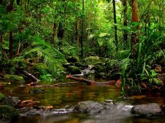 World Heritage site - Sinahraja rainforest - wild life srilanka