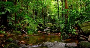 World Heritage site - Sinahraja rainforest - wild life srilanka