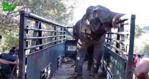 Big elephant gets washed and gets treated in a truck (part 2)
