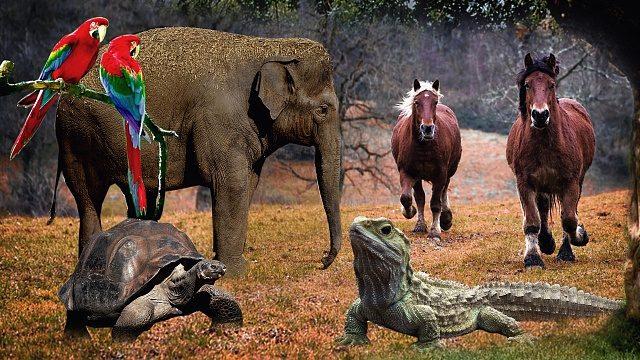 Top 10 Animals with Longest Lifespan