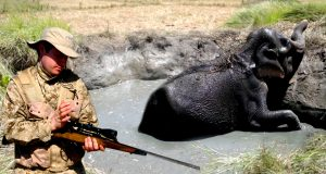 A look at Human-Elephant Conflict