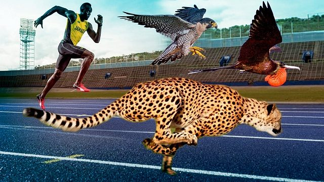 Animals faster than Usain Bolt