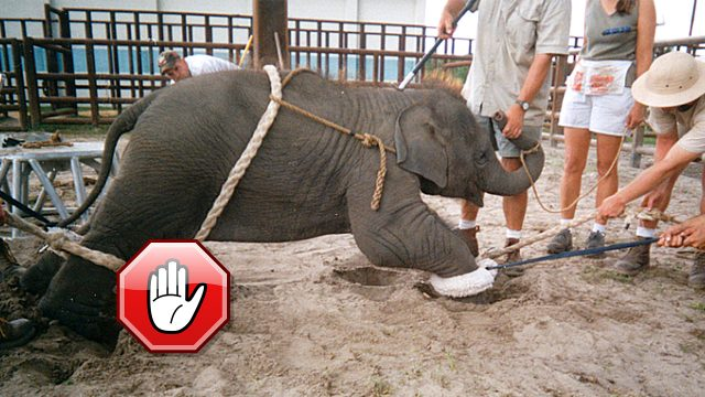Elephant circus acts are not for entertainment. It is cruelty!