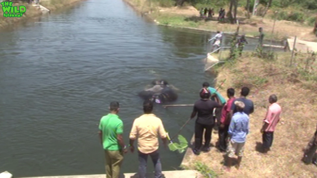 Guiding a trapped giant elephant out from a canal