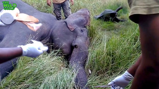 Sri Lankan wild elephants and brave wildlife officers