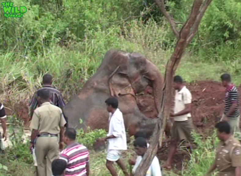 When Animals Meet Humanity: Helping An Elephant in a Mud Pit