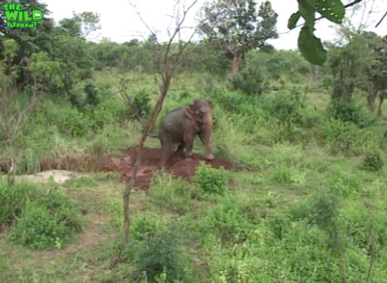 When Animals Meet Humanity Helping An Elephant in a Mud Pit image