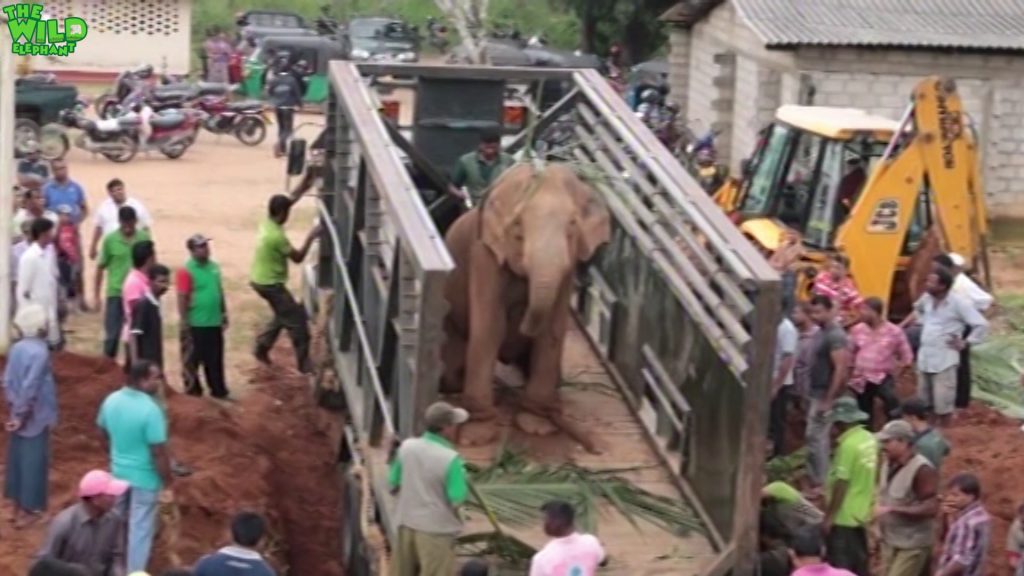 Giant elephant gets a ticket to a national park