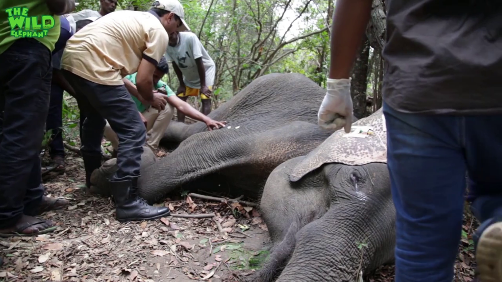 The look of humanity to an injured elephant
