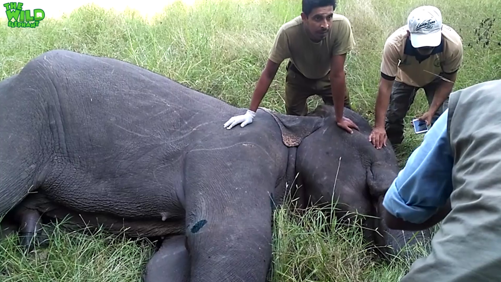 Sri Lankan wild elephants and brave wildlife officers