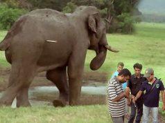 Tranquilizer shots for elephant treatments