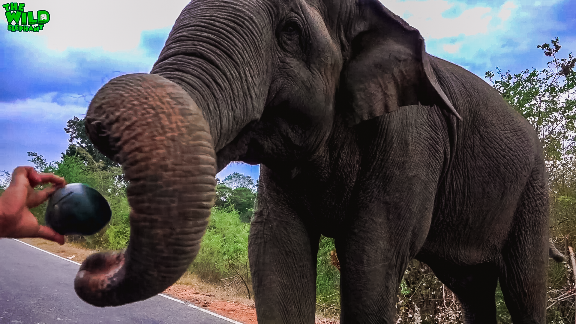 An elephant that takes bribes for a road pass caught in the act