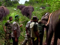 Wild elephant GPS tracker-placement mission