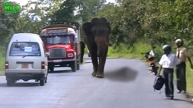 Never leave your vehicle and try to run vs. an Elephant