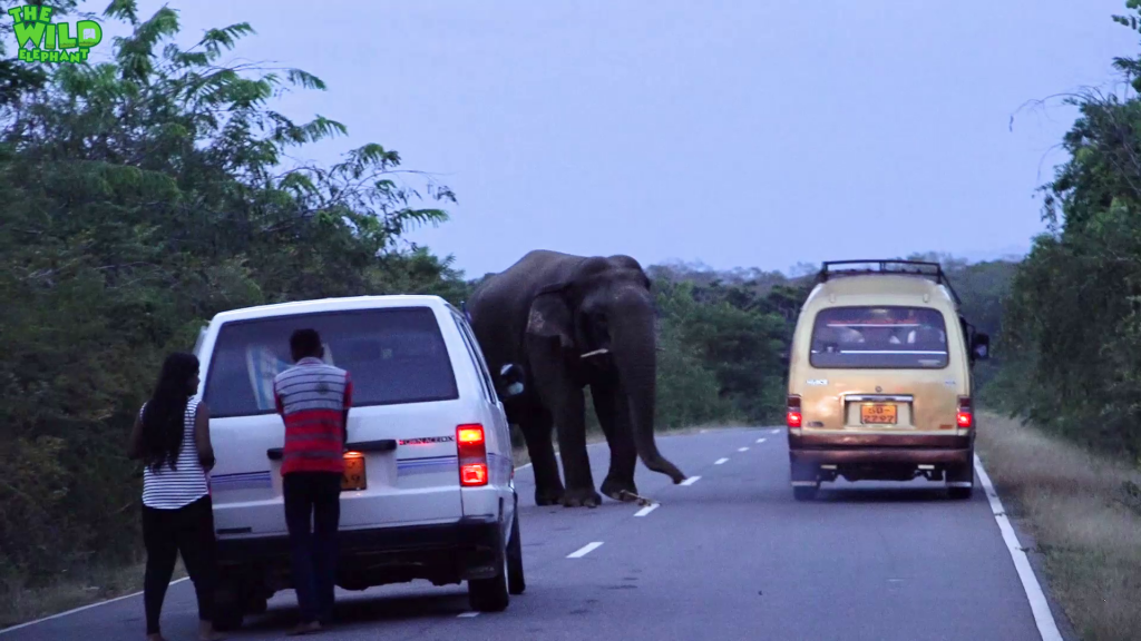 The elephant toll booth. No food? No pass!