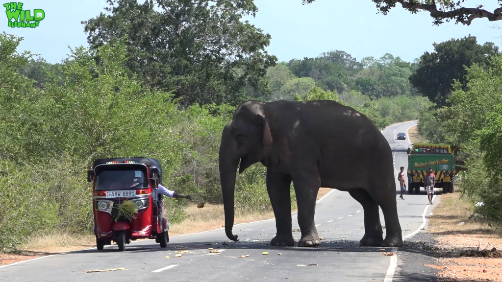 The most fed elephant in the world