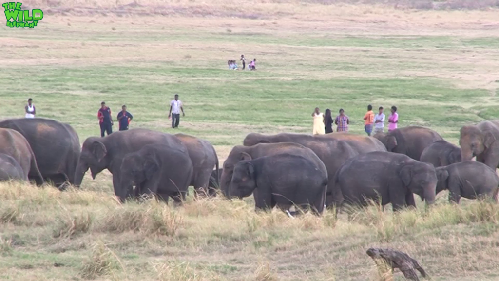 People and Elephants can chill together too